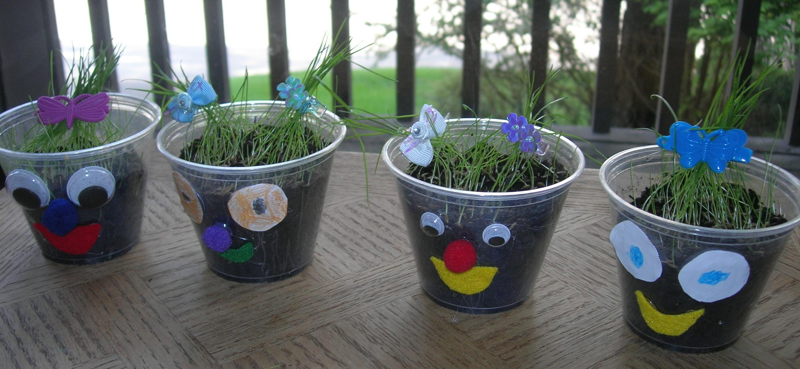 Growing Indoor Grass Susans Homeschool Blog