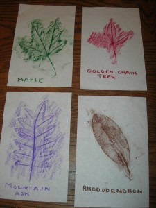 leaf-rubbings