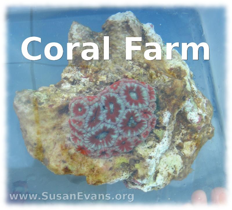 coral-farm