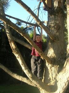 climbing-trees-7