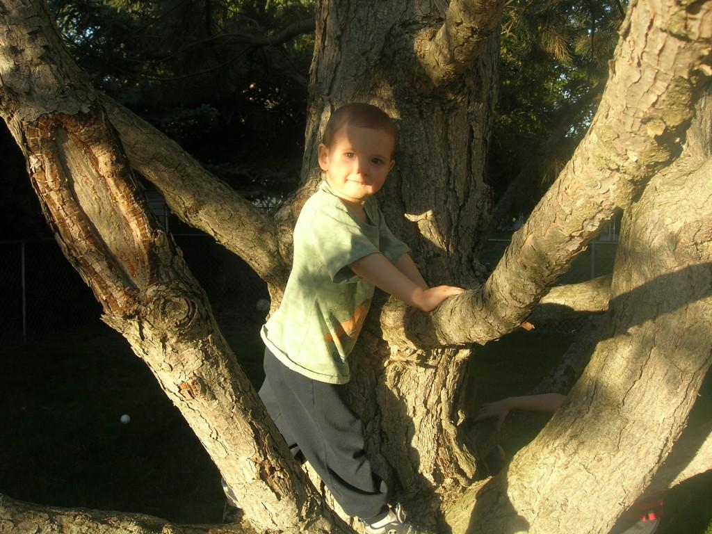 climbing-trees-8