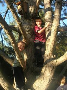 climbing-trees-6