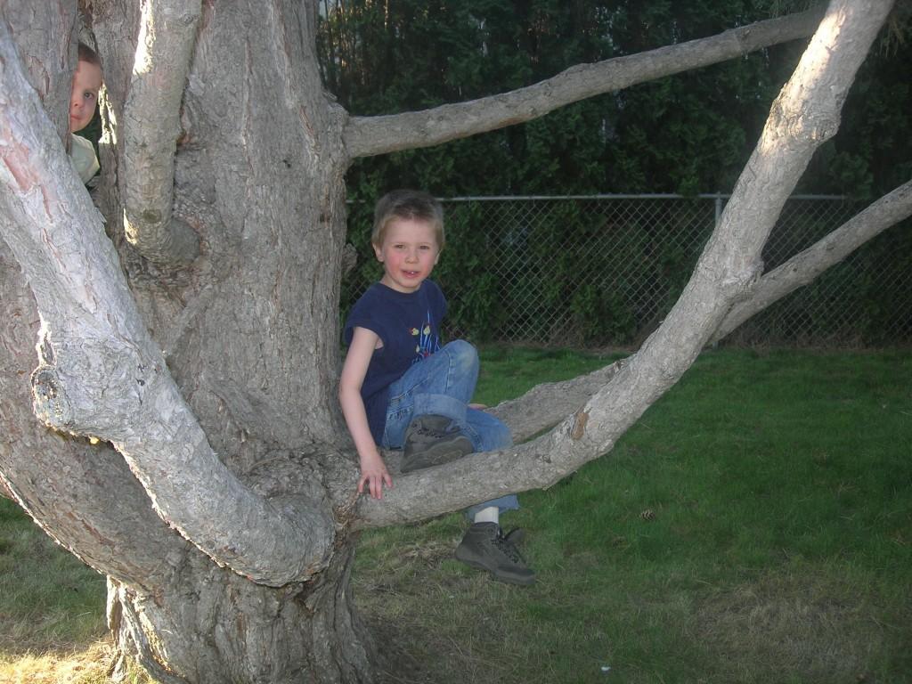 climbing-trees-10