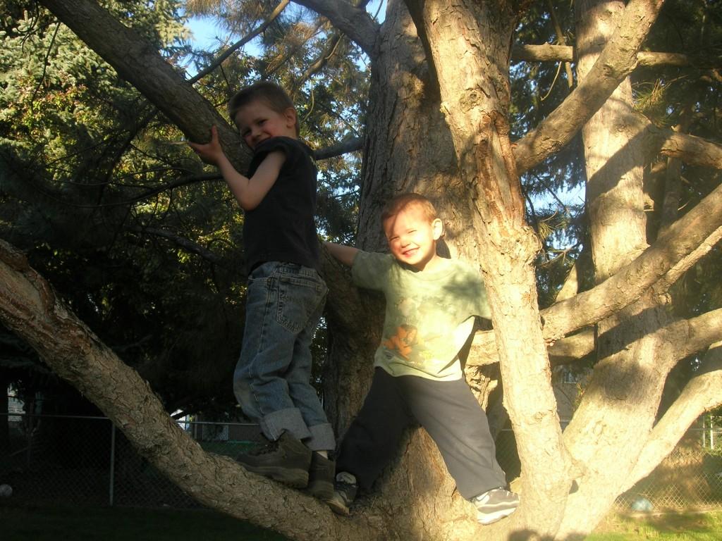climbing-trees-9
