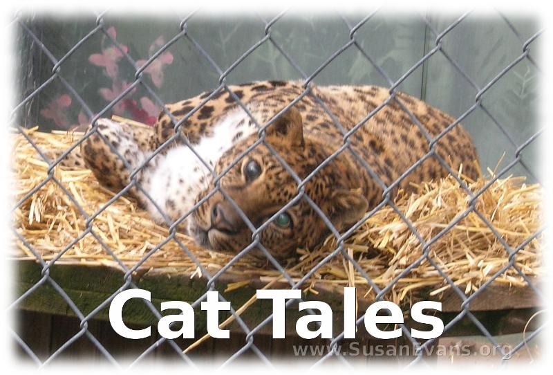 cat-tales