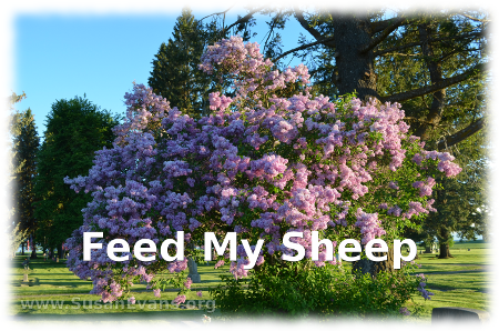 feed-my-sheep