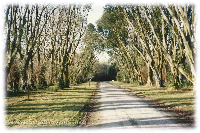 ireland-path