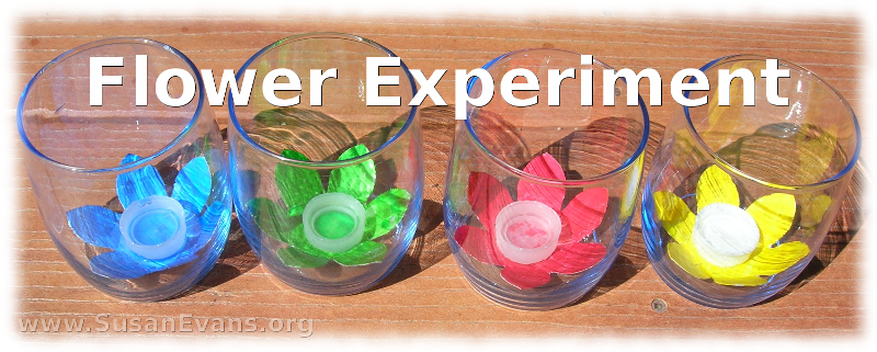flower-experiment