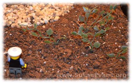 a-farmer-sows-seeds-6