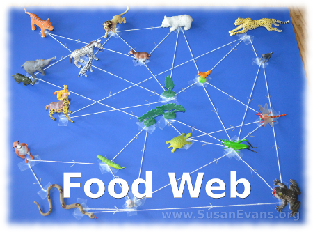food-web-activity
