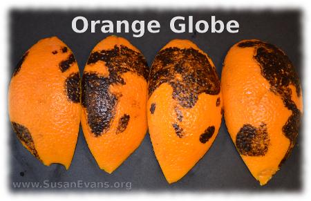 orange-globe