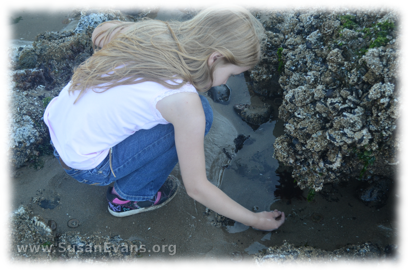 tide-pools-of-cannon-beach-3