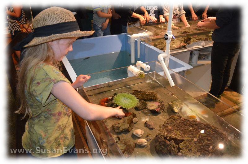 aquarium-at-cannon-beach-2