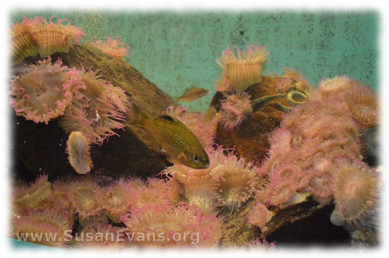 cannon-beach-aquarium-2