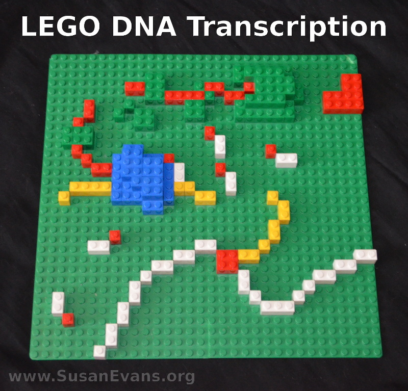 LEGO-DNA-Transcription