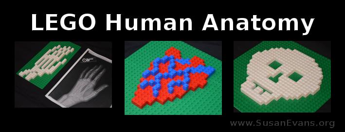 LEGO-human-anatomy