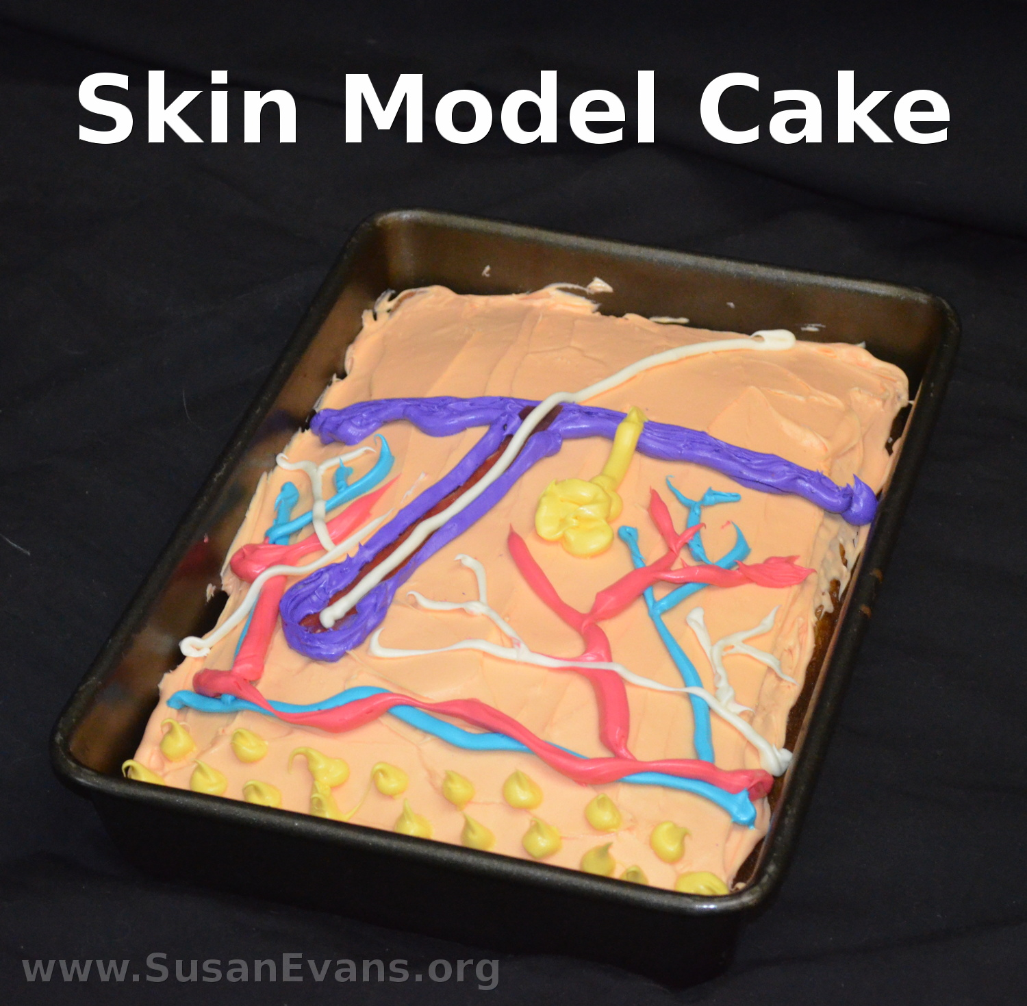 Skin Model Cake Susans Homeschool Blog Susans Homeschool Blog