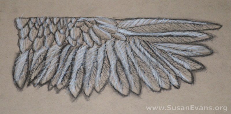 charcoal-wing