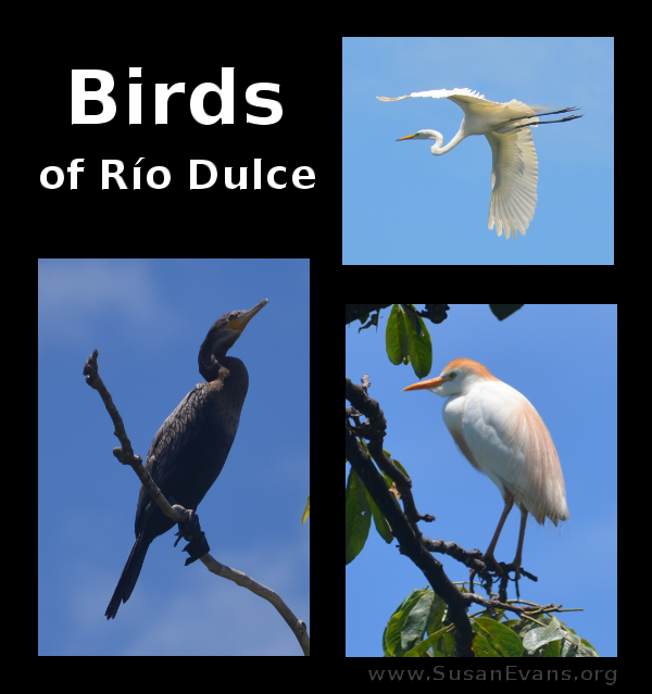 birds-of-rio-dulce