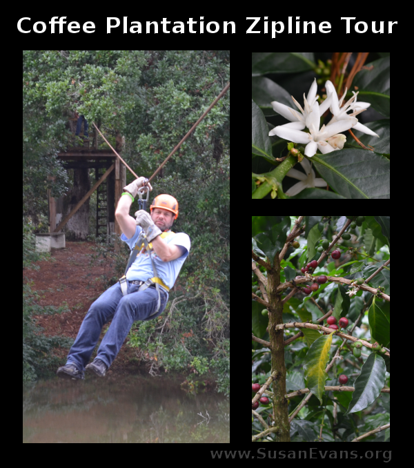 coffee-plantation-zipline-tour