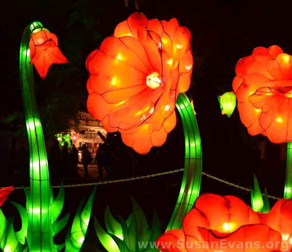 flower-lanterns