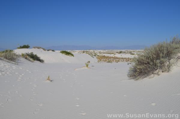white-sands-park