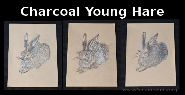 charcoal-young-hare