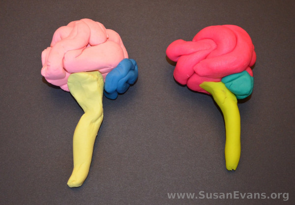 play-doh-brain
